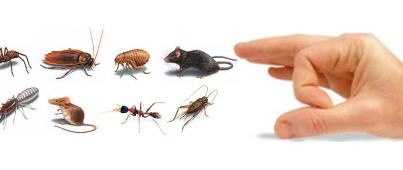 Trusted Pest Control Company in Phoenix, AZ